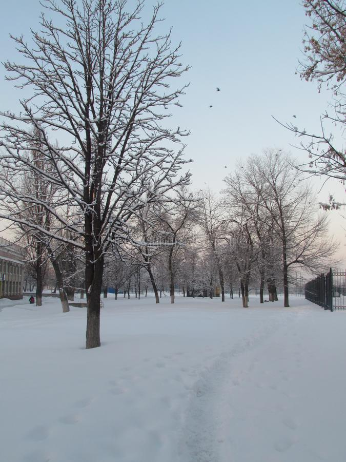冬天的魅力 库存图片