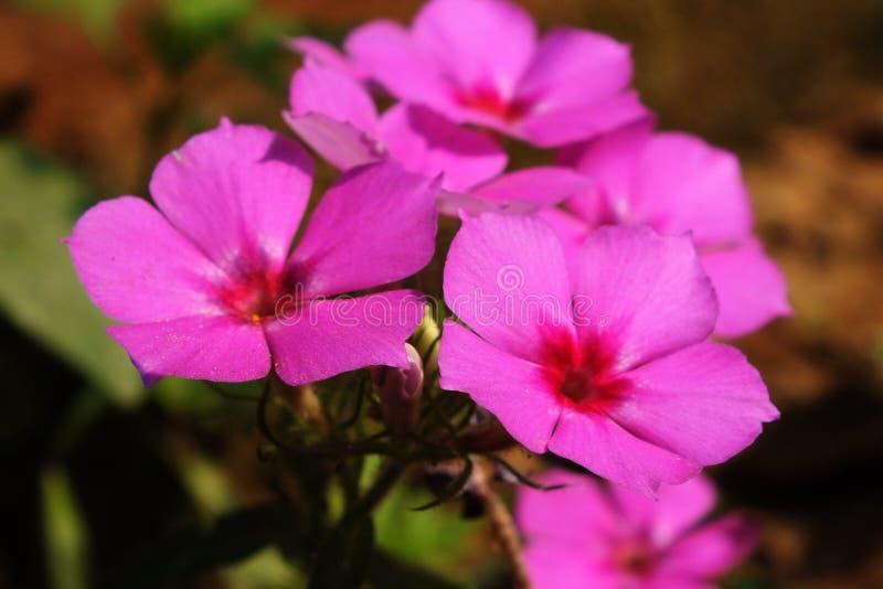 冬天看法的花关闭 免版税库存照片