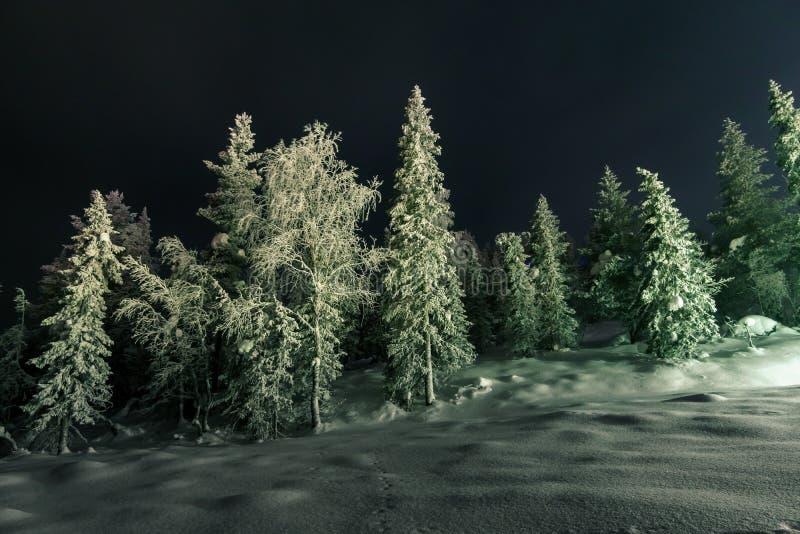 冬天神仙的森林在晚上 免版税库存照片