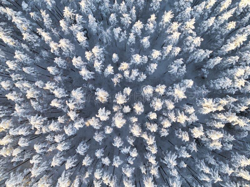 冬天积雪的杉木森林冬天森林纹理的鸟瞰图 鸟瞰图 冬天风景的空中寄生虫视图 Sno 库存照片