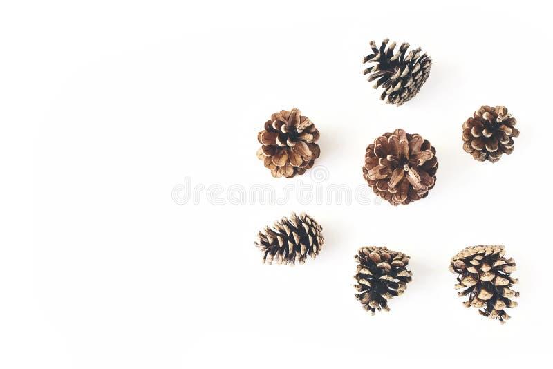 冬天简单的被称呼的植物的安排 杉木锥体的构成在白色桌背景隔绝的 圣诞节 库存图片