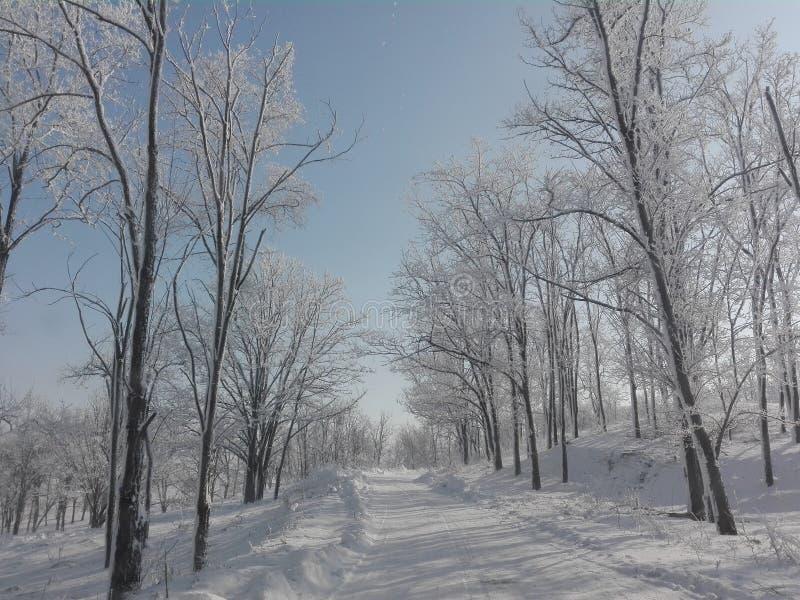冬天罗马尼亚2016年 库存图片