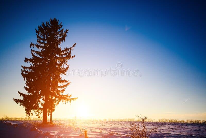冬天美好的风景 免版税库存照片