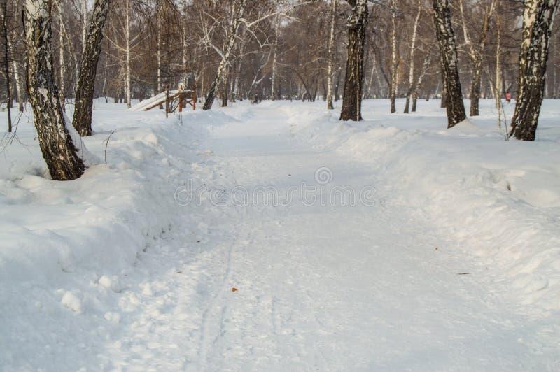 冬天胡同在公园,有在边和雪的树的漂移 库存照片