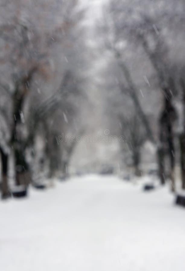 冬天自然,软的焦点 库存图片