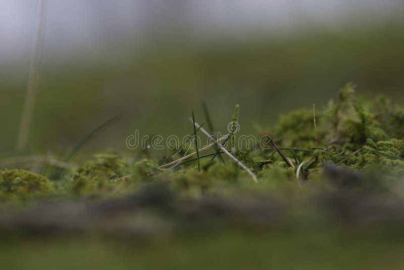 冬天草和露水在伊伦西班牙 免版税库存照片
