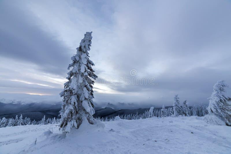 冬天蓝色风景 在深雪的云杉的树在山清洁在拷贝多云天空空间背景的冷的好日子  库存图片