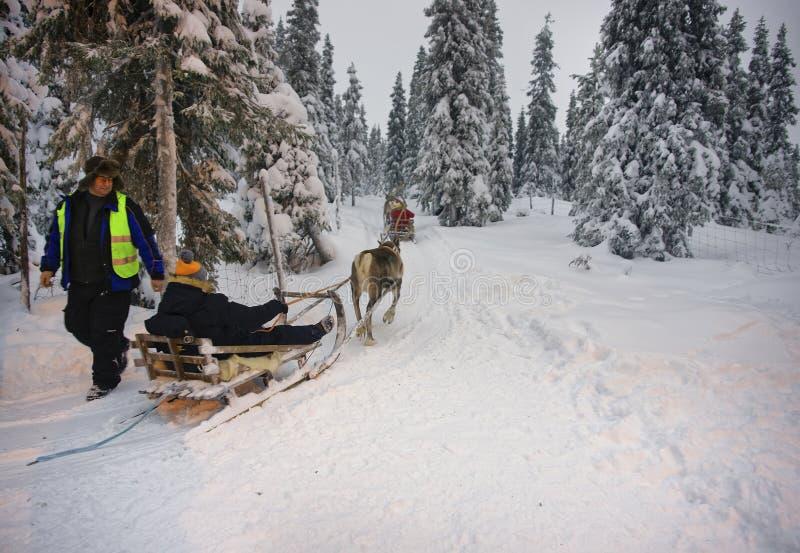 冬天赛跑在Ruka的驯鹿雪撬在拉普兰在芬兰 库存照片