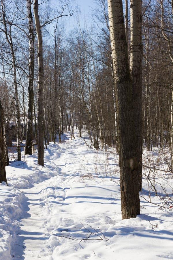 冬天足迹在森林里 免版税库存图片