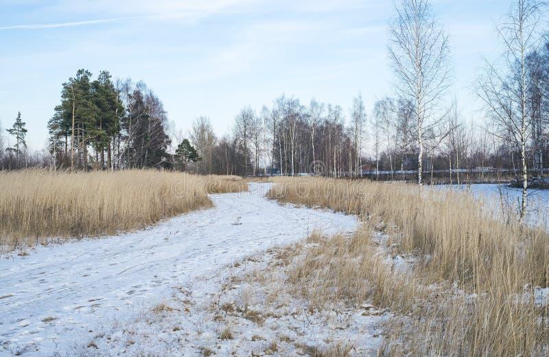 冬天路在俄罗斯 免版税库存图片