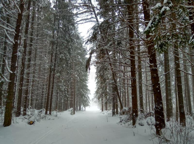 冬天路在滑雪者背景墙纸的多雪的具球果森林里 免版税库存图片