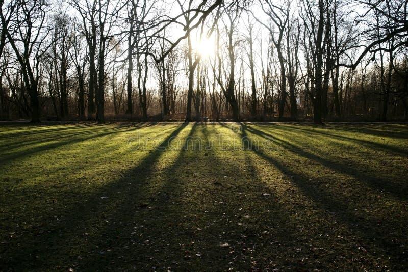 冬天阳光在森林里 图库摄影