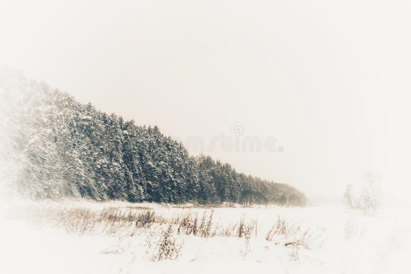 冬天雪和有雾的风景 免版税库存图片