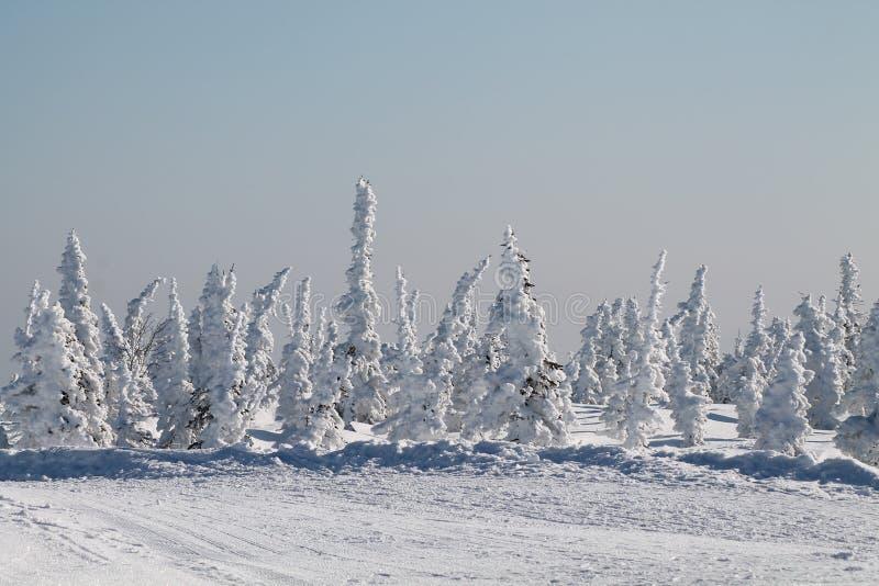 Download 冬天雪的山森林 库存图片. 图片 包括有 高地, 场面, 童话, 树冰, 全景, 本质, 横向, 冻结, 花卉 - 62529705