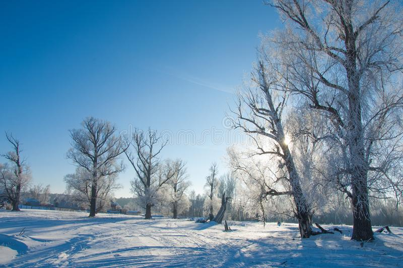 冬天霜 免版税库存图片