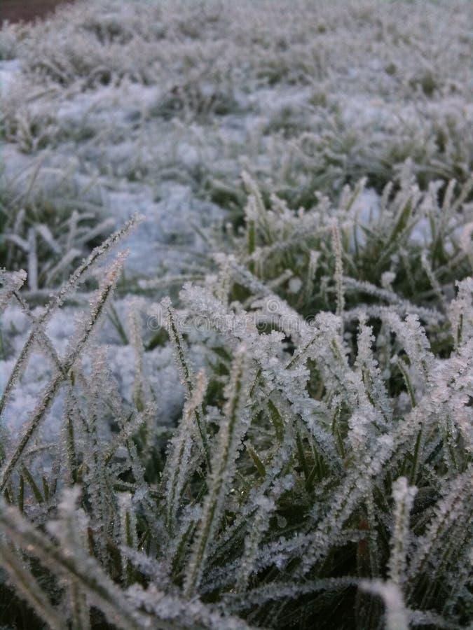 冬天霜 免版税库存照片