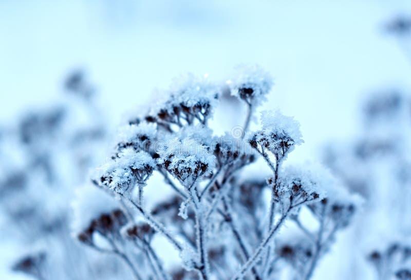 冬天风景。冬天场面 图库摄影