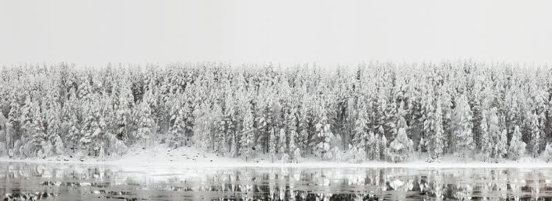 冬天风景。有反射的森林全景在河 库存照片