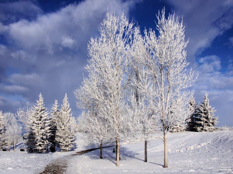 冬天风景冷淡的树 免版税库存图片