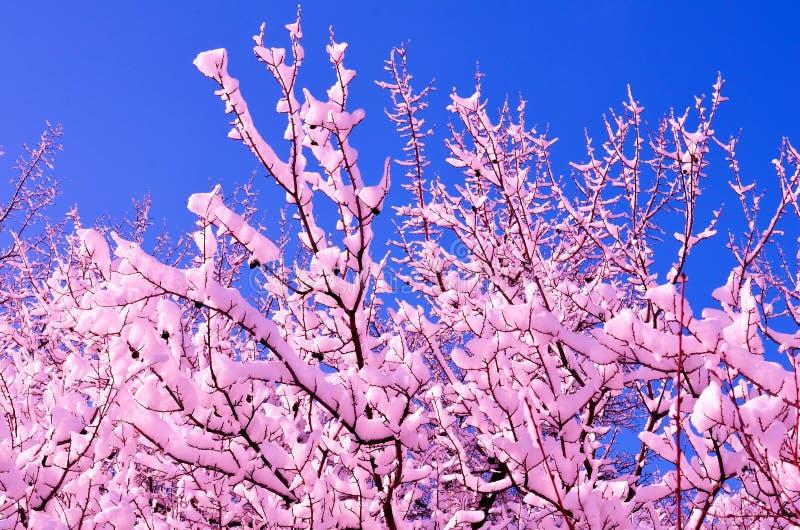 冬天风景包括与一个变化的积雪的树枝在雪上的颜色 免版税图库摄影