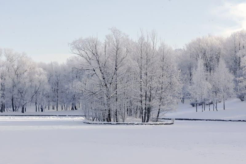 冬天风景在俄罗斯,轻积雪冻树和湖在小海岛上 免版税库存照片