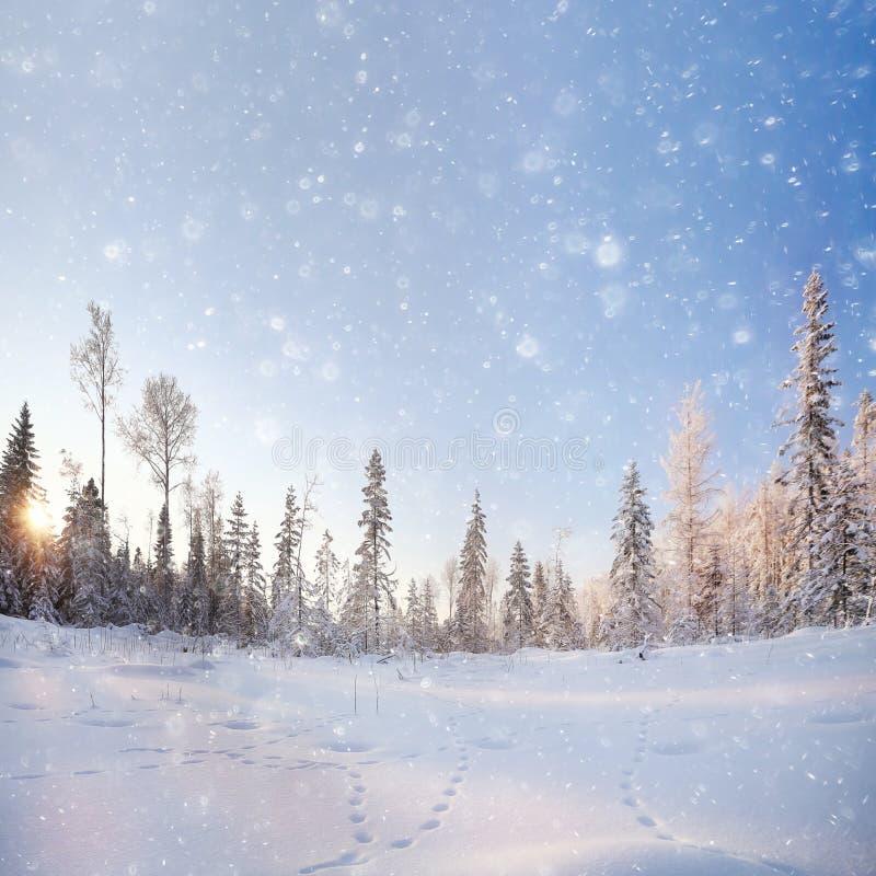 冬天风景在冷杉森林里 免版税库存照片
