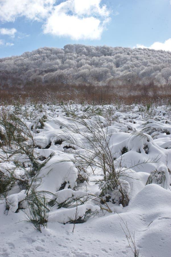 冬天风景在奥韦涅,法国 库存照片