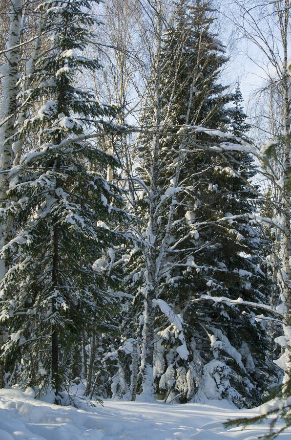 冬天风景在木头的 免版税库存照片