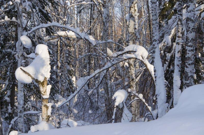 冬天风景在木头的 图库摄影