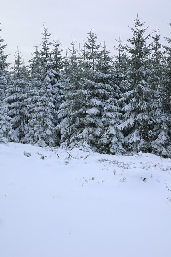 冬天风景在法国。 免版税图库摄影