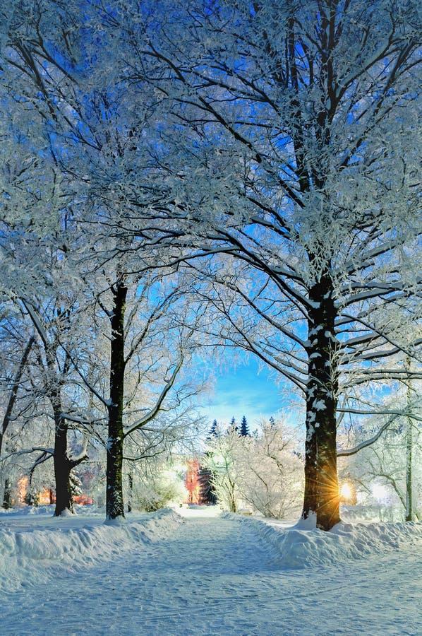 冬天风景夜场面-在多雪的树之间的离开的多雪的走道夜 库存图片