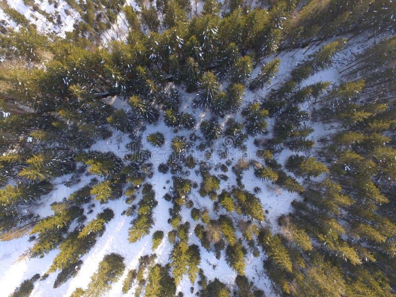 冬天风景天线 库存图片