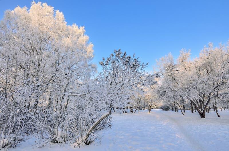 冬天风景秀丽在多雪的公园晴天 库存照片