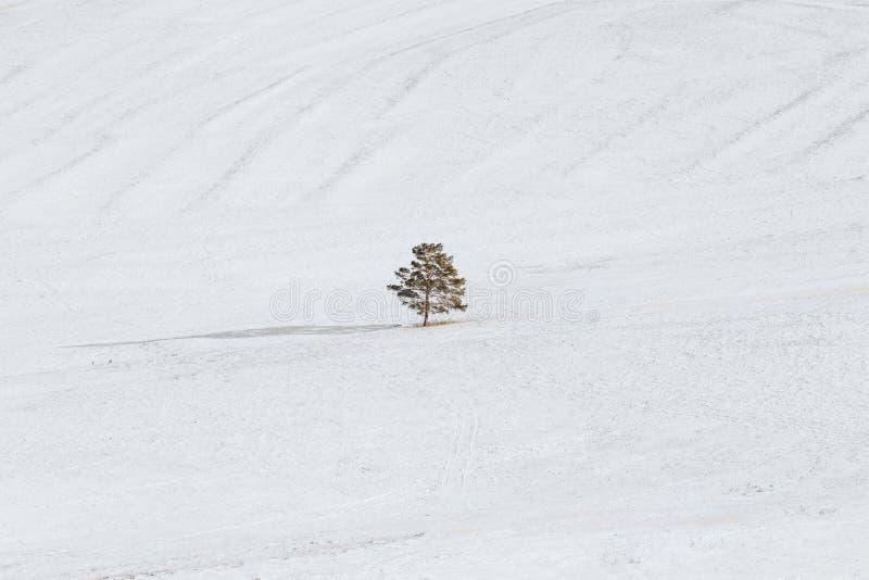 冬天风景,单独一个树立场在白色雪原 孑然和最小的概念 图库摄影