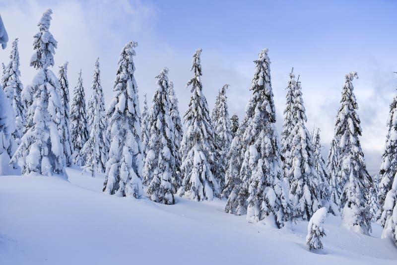 冬天风景,在山的积雪的树 Karkonosze,波兰 免版税库存图片