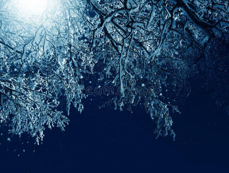 冬天风景,在月光的冷淡的树 图库摄影