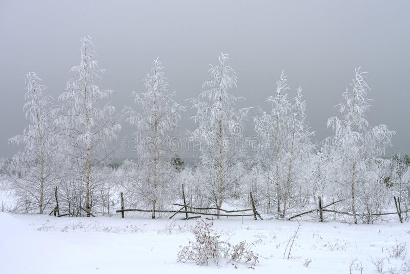 冬天风景,在雪云彩背景,巨大看法的积雪的桦树 免版税库存照片