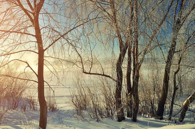 冬天风景-在冬天河附近的结霜的树日出的 图库摄影