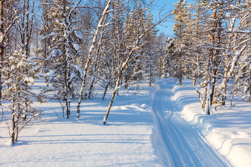 冬天风景-滑雪的新鲜的轨道通过森林 免版税库存图片
