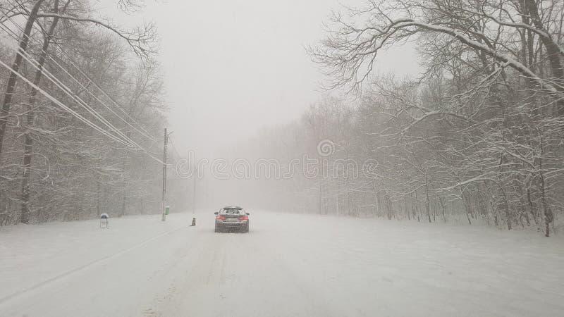 冬天风暴在Ostratu森林里 免版税库存照片