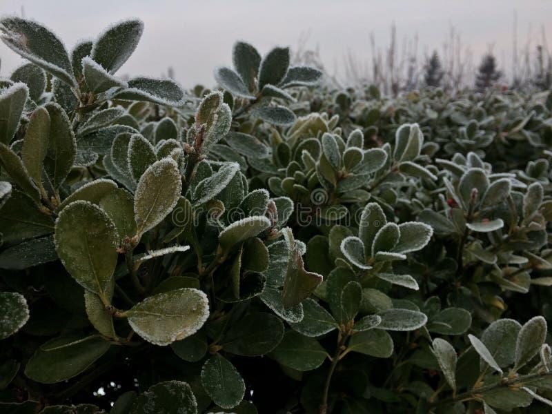 冬天魅力 免版税库存照片