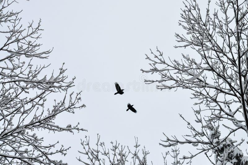 冬天鸟 免版税库存照片