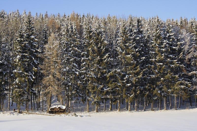 冬天,雪风景在巴伐利亚,德国 库存照片
