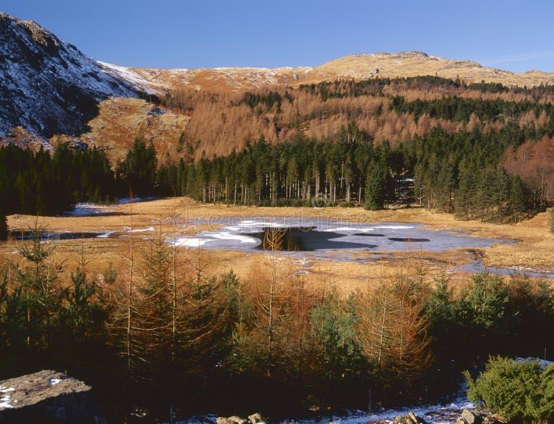 冬天, Harrop小湖, Cumbria 免版税库存图片