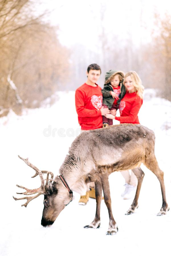 冬天,defocused 幸福家庭和美好的鹿步行和使用与雪在冬天 免版税库存图片