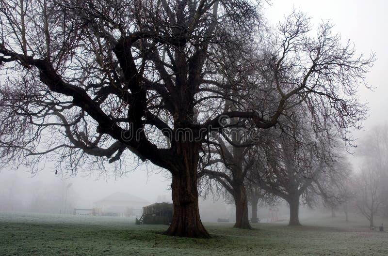 冬天令人毛骨悚然的树在Diss诺福克公园 免版税库存图片
