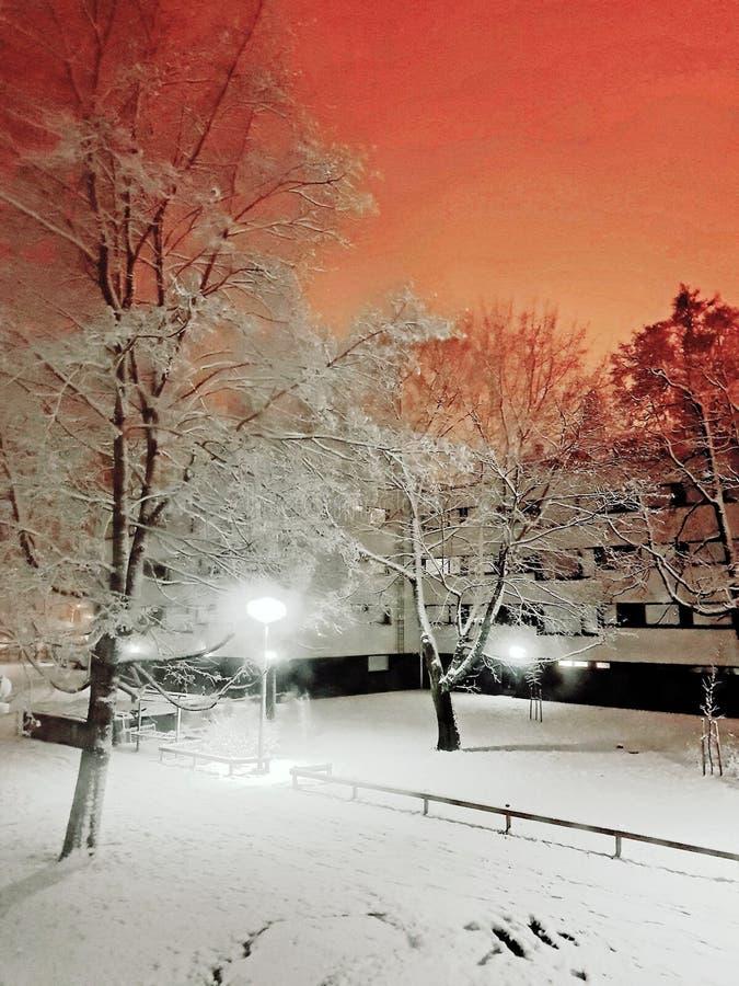 冬天2019年在芬兰 免版税图库摄影