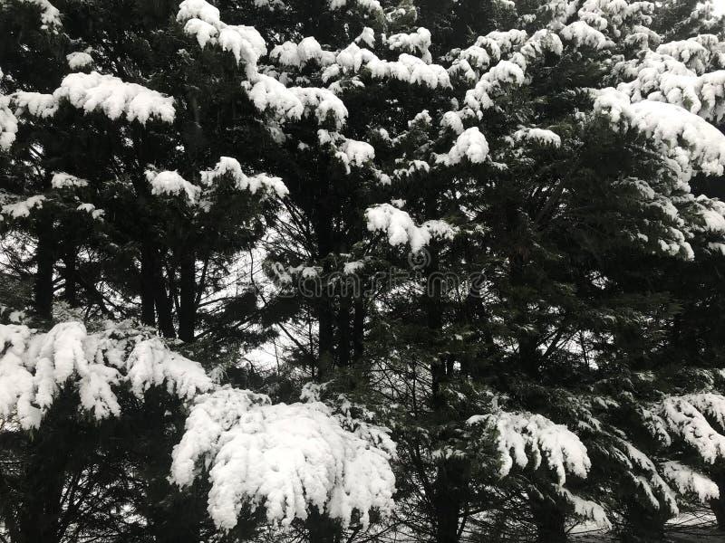 冬天2018年 库存图片