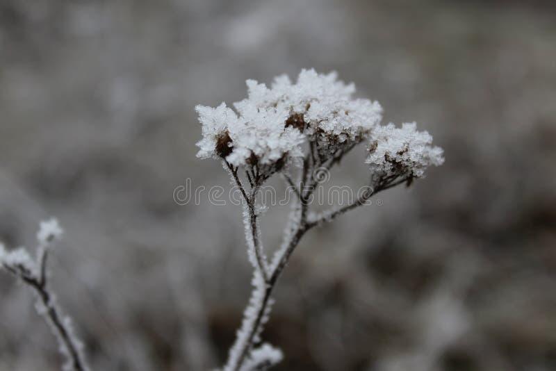 冬天绽放  库存照片