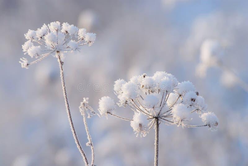 冬天细节 免版税库存照片